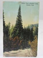 Vintage 1912 Postcard Perfect Tree in Boulder Canon Boulder Co