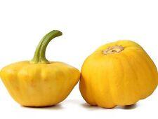 10 Graines Courge Patisson Jaune Méthode BIO seeds plante légumes ancien potager