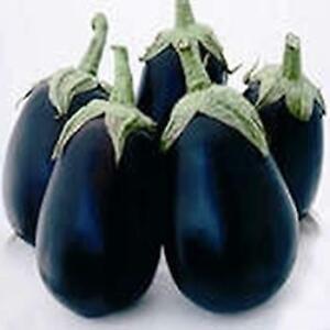 Aubergine - F1 Giotto - 10 Seeds