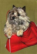 Cartolina ANTICA-cane in tasca