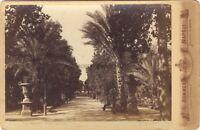 Italia Palermo Villa Giulia Foto G.Sommer Vintage Albumina Ca 1875