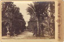 Palermo Palerme Villa Giulia Italie Photo G. Sommer Vintage Albumine ca 1875