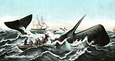 "C.1910 Sperm Whaling, ""The Capture."" Postcard P132"