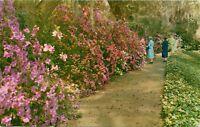 Magnolia Gardens Charleston South Carolina SC pm 1965 Postcard