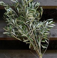 Fresh Olive Branch Bundle