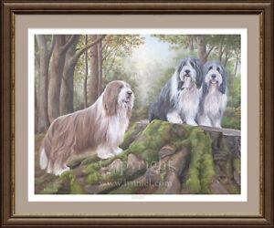BEARDED COLLIE 'Beardie' Limited Edition dog print 'Woodland Watch'