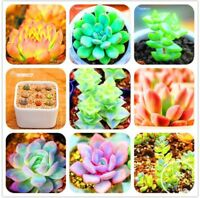 100Pcs/Bag Bonsai Seeds Mix Lithops Rare Succulent Flower Pseudotruncatella