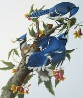 VINTAGE ROBINS BIRD FLOWERS NEST EGG *CANVAS* ART PRINT