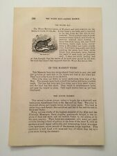 New listing T1) The Water Rat Native of England Animal Kingdom c.1870 Engraving