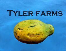 10+ Papaya seeds, farm fresh, ready to grow tropical fruit
