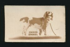 1948 Topps Magic (American Dogs) -#10 Cocker Spaniel *1st Topps Issue*
