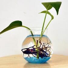Clear Glass Flower Planter Vase Terrarium Container Fish Tank Table Decor
