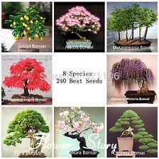 8 Kinds BONSAI TREE SEEDS 227 Seeds, High Germination RARE Flower Seeds