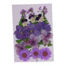 12Pcs Natürliche Echte Getrocknete Gepresste Hundeschwanzgras Blumen DIY
