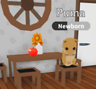 SALE - ROBLOX ADOPT ME PETS- 4 X UNCOMMON PUMA`S. ENOUGH FOR YOU TO MAKE A NEON