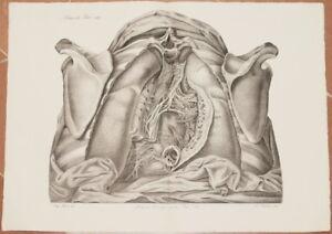 ANTONIO SCARPA 1839 LITOGRAPH MEDICINE SURGERY ANATOMY RESPIRATORY SYSTEM