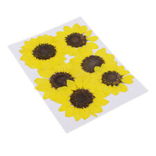 Dried Sunflower 5-6 Stems with Beautiful Decoration Wrapping