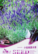 1 Pack 20 Lavender Seeds Lavandula Angustifolia Little Girl Lavender Herb D035