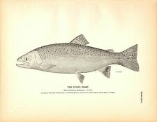 Rare 1884 Antique Fish Print ~ The Trout Collection ~ Lot of 6 prints