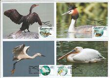 maxi card 02 Fauna Via Pontica Bird Migratory Route European birds Bulgaria 2019