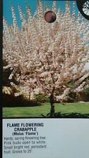 Flame Flowering Crabapple 5 gallon Tree Plant Fruiting Flower Trees Landscaping