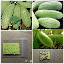 Rare Italian Cucumber ''Carosello di Polignano'' ~15 Top Quality Seeds - Organic