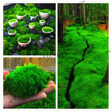 100Pcs Green Moss Seeds Rare Exotic Viable Bonsai Plant Potted Decorative Garden