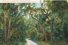 NEW SMYRNA and DAYTONA FL – Bridal Arch near Old Rock House Ruins