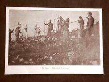 WW1 Prima guerra mondiale 1914-1918 Sul Carso nel 1916 Costruzione di reticolati