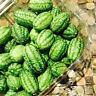 30 Mini Wassermelone Samen, Wassermelone Samen, Wassermelone  - Rarität bes K3M7