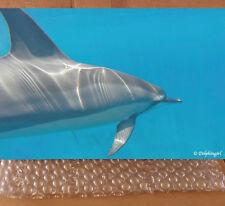 "SALE! Limited Edition Metal Print: Wild ""The Dolphin Truth"""