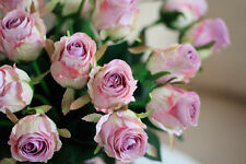REAL TOUCH  German Rose x 6 - artificial flowers - 5 colours  available