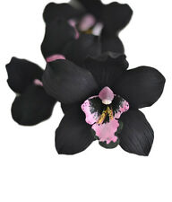 Rare Unusual exotic Black with Pink throat Orchid Petals 5 seeds Rare US seller