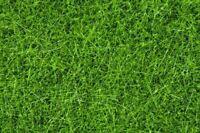 NOCH ALL SCALE WILD GRASS XL DK GRN 100G | BN | 7094