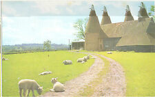 "Kentish ""Oast Houses"" with sheep grazing nearby(A.Salmon Ltd 1-64-00-06)"