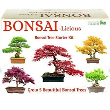 Bonsai Tree Kit Grow Your OWN Bonsai Trees from Seeds. Great gift Idea Seed Kit.