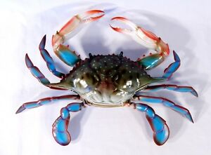 """Hand Painted 16"""" Large Blue Crab Wall Mount Decor Sculpture 32B"""