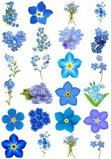 24 Mixed Forget Me Not Flower Large Sticky White Paper Stickers Labels New