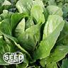 Parris Island Romaine Lettuce Seeds - 500 SEEDS NON GMO