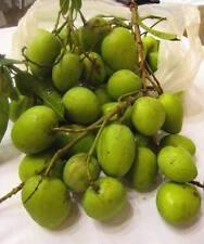 3 seeds Mango 'Ka-lon' Thailand mango Sweet taste rare mango rare seed