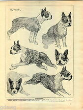 1930 Book Plate Print Dog Sketch Boston Terrier G Ambler Boxer Germany