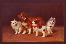 Sperlich... Katzen, Kätzchen Surround irritierten Welpe Hund, chromolithograph Postkarte