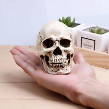 White Small Human Skull Replica Resin Model Medical Realistic 11x7x8.5cm
