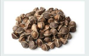 500g Moringa Oleifera Seeds Organic  Miracle Moringa seeds