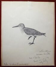 Tavy Notton dessin crayon signée sur papier bécasse chasse oiseaux ornithologie