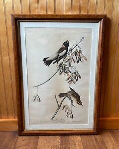 Rare 1840s 1st Edition John J Audubon (1785-1851) Rice Bird Colored Print No.11