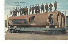 Postcard Two Natives Of Washington Bear Den & Dwelling In A Washington Sawlog Rr