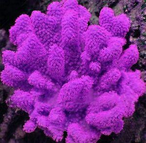 Beautiful plants Aquarium moss fern water landscape fish decor grass 1000 seeds