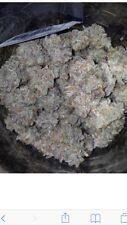 Blue Dream Stardog Seeds From Dark Horse Generics  20 Pieces.regular Seeds