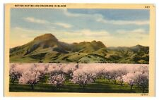 Sutter Buttes and Orchards in Bloom, CA Postcard *5D